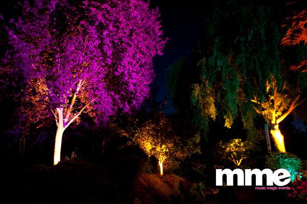 Wedding-Uplighting-Trees